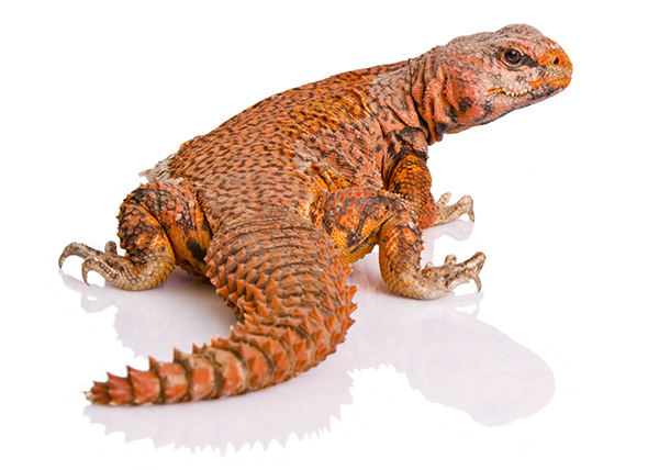 Industry leader in reptile shipping